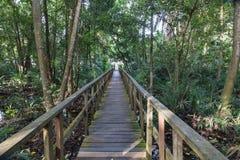 Brettweg entlang dem Mangrovenwald mit Mangrovenbäumen, wie in der Lekki-Erhaltungs-Mitte in Lekki, Lagos Nigeria gesehen stockfotos