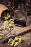 Breuvage magique d'élixir des herbes Photographie stock libre de droits