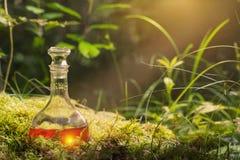 Breuvage magique magique dans la bouteille dans la forêt Images libres de droits