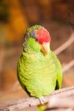 Breuvage magique de perroquet photographie stock