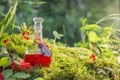 Breuvage magique magique dans la bouteille dans la forêt Image stock