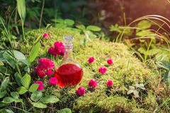 Breuvage magique magique dans la bouteille dans la forêt Photographie stock libre de droits