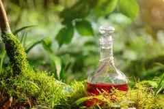 Breuvage magique magique dans la bouteille dans la forêt Photos libres de droits