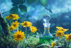 Breuvage magique magique dans la bouteille dans la forêt Photo libre de droits