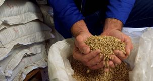 Brewer checking grains 4k. Brewer checking grains at brewery factory 4k stock video footage