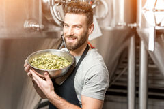 Brewer at the manufacturing Stock Photography