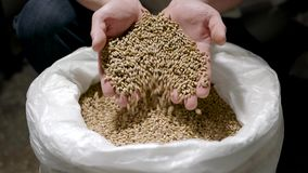 Brewer is taking whole grain grist from white bag and pouring it back, detail view of hands. Warehouse of brewery stock footage