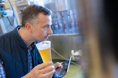 Brewer in uniform tasting beer at brewery Royalty Free Stock Image