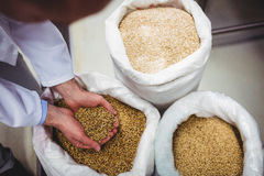 Free Brewery Manufacturer Holding Barley Over Sack Royalty Free Stock Photography - 75187267