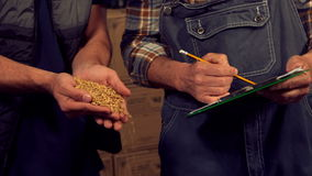 Brewery workers checking the quality of hob grains stock video footage