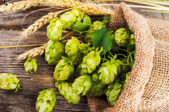 Brewing concept. Ingredients for beer production Royalty Free Stock Images