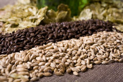 Brewing Ingredients. Pale malt, crystal malt, chocolate malt, wheat malt and aromatic hops Stock Photos