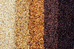 Brewing malt background. A gradient background of brewing malt grains stock image
