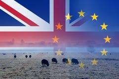 Brexit概念、英国乡下有绵羊的在一个领域与英国国旗和E 在上面分层堆积的U旗子 免版税库存图片