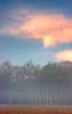 Brezo brumoso en la salida del sol Imagen de archivo libre de regalías
