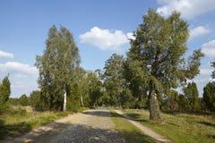 Brezo de Luneburg - camino con el guijarro en el paisaje Fotografía de archivo libre de regalías