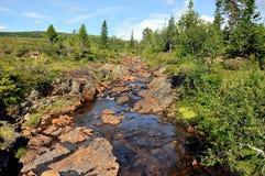 Brezo del pantano en verano Imagen de archivo libre de regalías