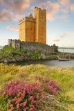 Brezo en el castillo de Kilcoe Foto de archivo libre de regalías