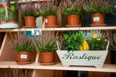 Brezo en el flowershop imagen de archivo libre de regalías