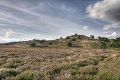 Brezo en la colina Foto de archivo libre de regalías