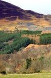 Brezo y montañas escocesas Imagen de archivo