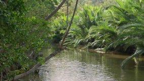 Brezza che soffia delicatamente attraverso l'insenatura ed il boschetto fertile della palma nipa archivi video
