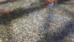 Brezza e riflessioni sulla superficie dell'acqua archivi video