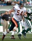 Brian Urlacher Chicago Bears Foto de archivo