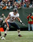 Brian Urlacher Chicago Bears Foto de archivo libre de regalías