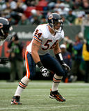 Brian Urlacher Chicago Bears Stockfotos