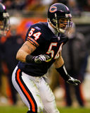Brian Urlacher Chicago Bears Royalty Free Stock Photos