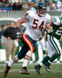 Brian Urlacher Chicago Bears Stock Photo