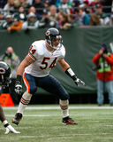 Brian Urlacher Chicago Bears Royalty Free Stock Photo