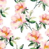 Briar акварели цветет безшовная картина Ветви собаки розовые Стоковые Фото