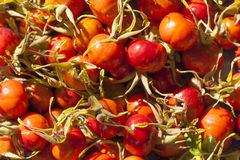 Briar berries Royalty Free Stock Photos