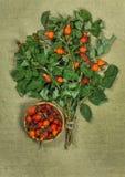 Briar, brier, wild rose.Dried herbs. Herbal medicine, phytothera Stock Image