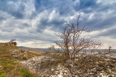 Briar bush at the concretion stone with moss and lichens. At early spring under heavy clouds, Stavropol kray, Russian Federation stock photo
