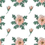 Briar rose color sketch seamless Royalty Free Stock Images