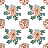 Briar rose color sketch seamless Stock Image
