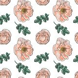 Briar rose color sketch seamless Stock Photo
