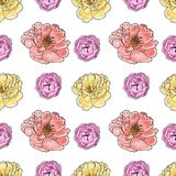 Briar rose color sketch seamless Stock Images