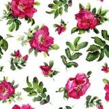 Briar Rose flowers handmade watercolor seamless pattern gentle. Flowers, leaves of handmade seamless pattern wild roses. Briar, watercolor painting for Stock Images
