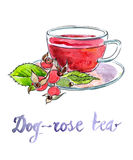 Briar tea. Cup of briar tea with berries - Illustration Royalty Free Stock Photo