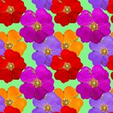 Briar, wild rose, dog-rose. Seamless pattern texture of flowers. Royalty Free Stock Photography