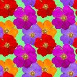 Briar, wild rose, dog-rose. Seamless pattern texture of flowers. Briar, wild rose, dog-rose. Texture of flowers. Seamless pattern for continuous replicate Royalty Free Stock Photography