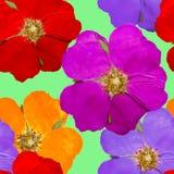 Briar, wild rose, dog-rose. Seamless pattern texture of flowers. Briar, wild rose, dog-rose. Texture of flowers. Seamless pattern for continuous replicate Stock Image