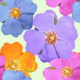 Briar, wild rose, dog-rose. Seamless pattern texture of flowers. Briar, wild rose, dog-rose. Texture of flowers. Seamless pattern for continuous replicate Stock Images