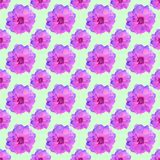 Briar, wild rose. Seamless pattern texture of flowers. Floral ba Royalty Free Stock Photo
