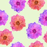 Briar, wild rose. Seamless pattern texture of flowers. Floral ba Stock Image