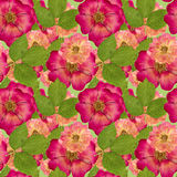 Briar, wild rose,. Seamless pattern texture of pressed dry flowe Royalty Free Stock Photo